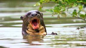 Paddling Through the Pantanal thumbnail