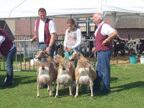 Photo: Eigenaarsgroepen toggenburger geiten. 1a. J. Hazendonk oudere geiten. 1b. J. Hazendonk jongere geiten.