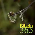 365 Bibeln