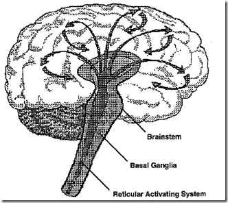 Reticular Activating System 2