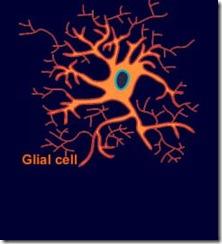 glial_cell