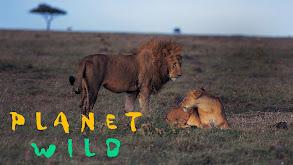 Planet Wild thumbnail