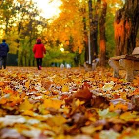 autumn steps by Cornelius D - City,  Street & Park  City Parks