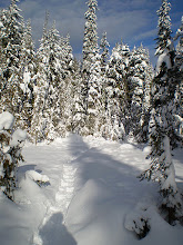 Photo: Gullan's Gully Snow shoe trail - Larch Hills