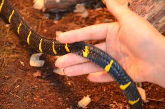 Photo: Farnaz handling a snake