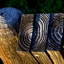WOOD - TOGETHER by Magdalena Wysoczanska - Nature Up Close Other Natural Objects ( pieces, magdalena wysoczanska, man made, pattern, wood, grain )