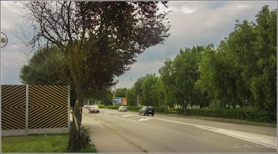Photo: Calea Victoriei, Mr.III, spatiu verde , corcodus rosu ornamental  (Prunus cerasifera Nigra) - 2017.06.17