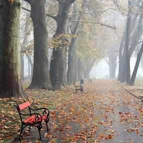 by Emil Chuchkov - City,  Street & Park  City Parks ( cuckove canon skopje park autumn fall )