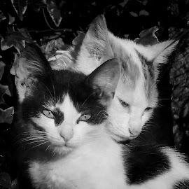 by Nicolaie Subotin - Black & White Animals