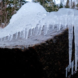Just creepin' by Sandra Updyke - Nature Up Close Other Natural Objects ( january, ice, icicles, lake superior, rocks )