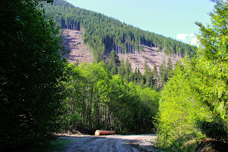 Photo: Recently logged forest in a spotted owl wildlife habitat area located near Depot Creek, Chilliwack Lake, BC.