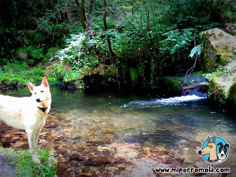 Can de Palleiro en el río Alba de Asturias