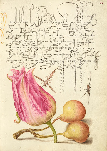 Imaginary Insect, Tulip, Spider, and Common Pear