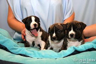 Photo: Triplets :)