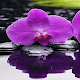 Download Purple Orchid Live Wallpaper for PC