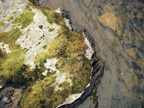 Photo: Boulder supporting Hygrohypnum polare beside mountain lochan