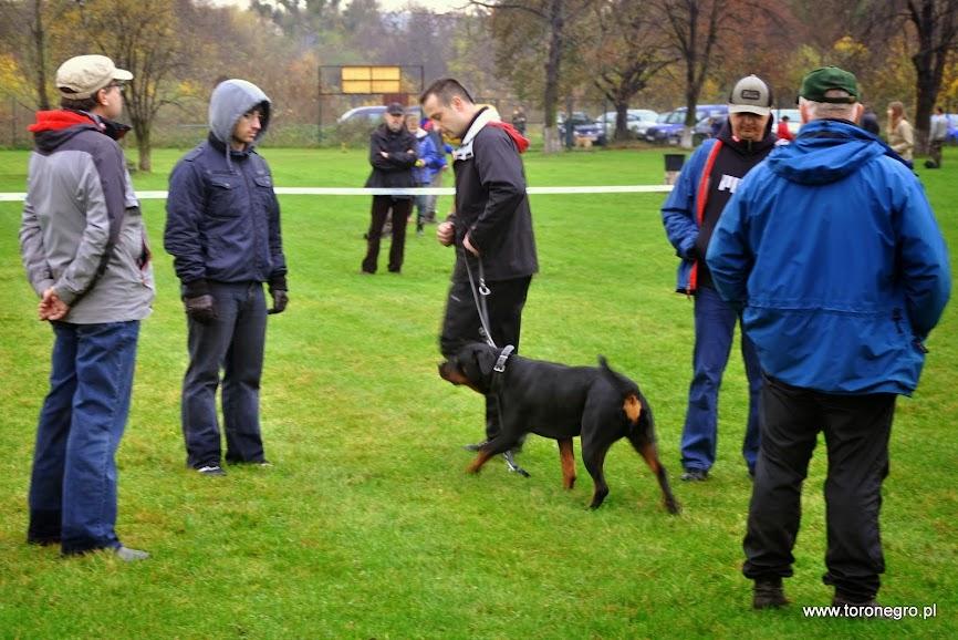 duży szpler ludzi i pies