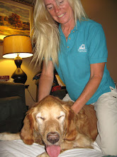 Photo: Colvin, a 7 yr yound Golden, is recovering from Lymphoma, currently going through Chemotherapy.