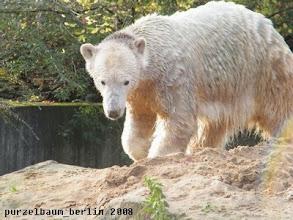 Photo: Und schon ist Knut wieder draussen ;-)