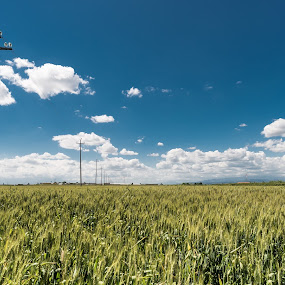 Campo di frumento by Andrea Fraccaroli - Landscapes Prairies, Meadows & Fields