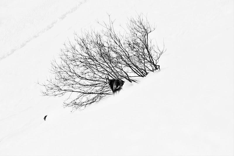 Sotto un manto  di neve di ScrofaniRosaria