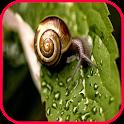 Snail Wallpaper icon