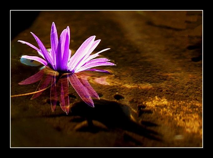 Il fiore danzante di kaira