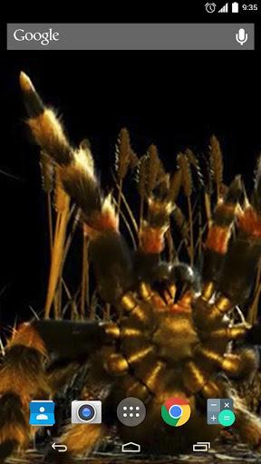 Tarantula Spider Attack Live