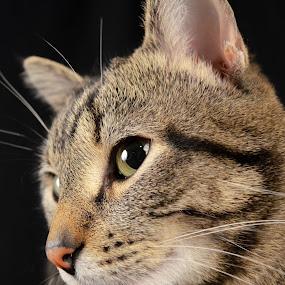 by Sean Valdez - Animals - Cats Kittens