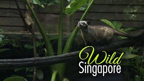 Wild Singapore thumbnail