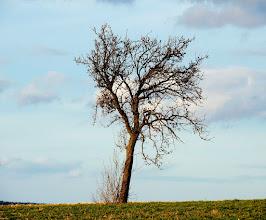 Photo: alone and abandoned  #treetuesday // +Tree TuesdayCurated by +Christina Lawrie , +Shannon S. Myers , +Allan Cabrera , +Ralph Mendoza and +Kim Troutman #fotoamateur // +Fotoamateurby +Britta Rogge+Karsten Meyer+Scotti van Palm+Markus Landsmann+Remo Primatesta #hqsplandscape // +HQSP Landscape