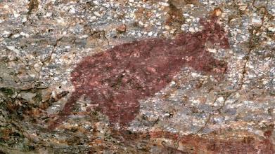 Photo: Day 3 -  Rock art at Burrunggui, Barrk, the Black Wallaroo © Ian Morris