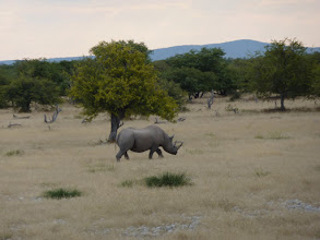 Photo: Etoschapark, Nashorn