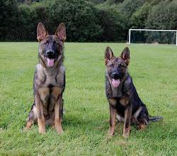 Photo: Argus og Ayla 7 mnd