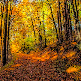Golden Autumn by Mihail Marzyanov - Landscapes Forests