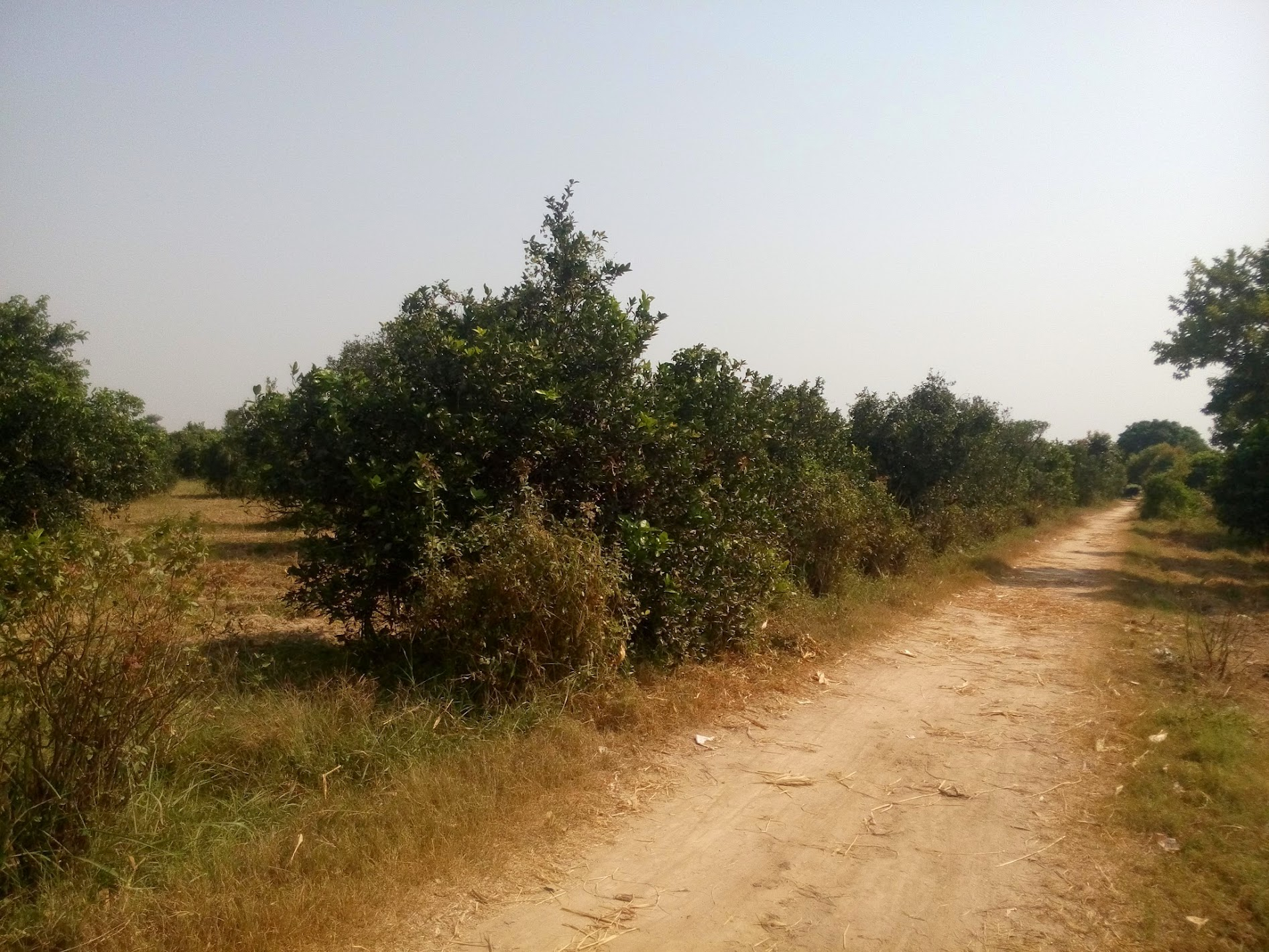 The Estate of Gangapur