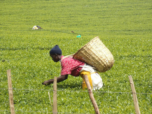 Kenya cuts import bill, pushes up key exports