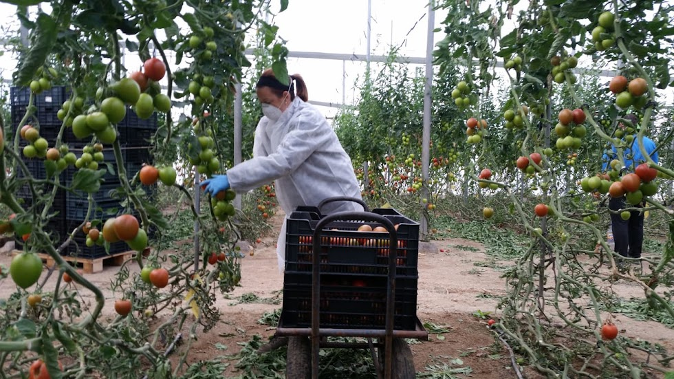 La cooperativa CASI, medidas en la agricultura.