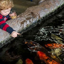 Feeding Koi by Chris Seaton - Babies & Children Children Candids ( young boy, feeding fish, koi, fish, child )