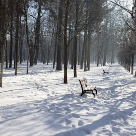 Cold morning by Oana Stefana - City,  Street & Park  City Parks ( winter, bench, park, snow, trees, lines, shadows )