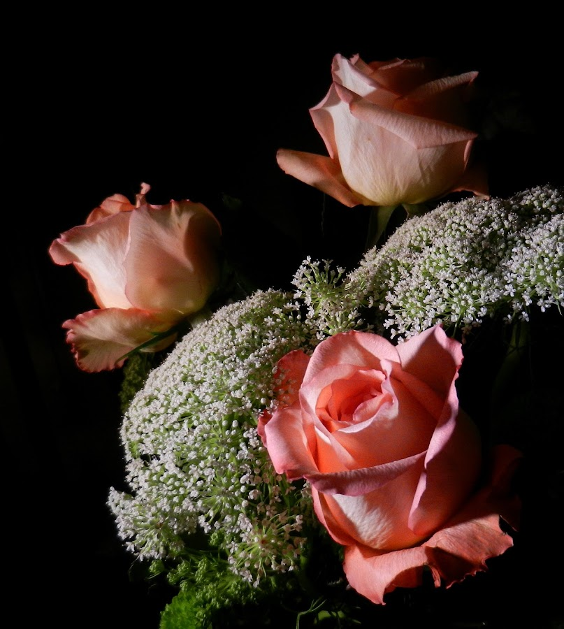 Peachy Contrast by Kathy Rose Willis - Flowers Flower Arangements ( arrangement, roses, peach, flowers, black,  )