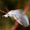 White Feather.jpg