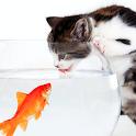 cat fish wallpaper icon