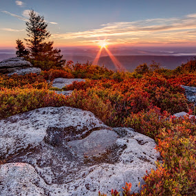 Peeking Sun at Dolly Sods by Eric Gaston - Landscapes Sunsets & Sunrises ( nature, west virginia, autumn, outdoors, fall, dolly sods )