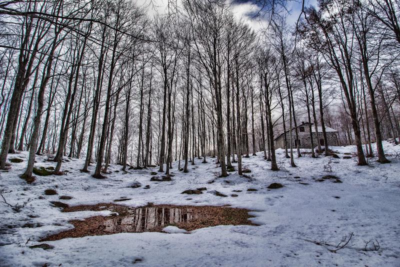 ..e allora discese lieve lieve la fiorita neve  di Gianluca Presto