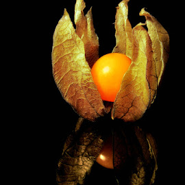 PHYSALIS by Karen Tucker - Food & Drink Fruits & Vegetables ( cape gooseberry, fruit, healthy food, colourful, food, physalis,  )