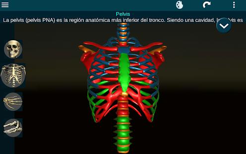 Sistema Oseo en 3D (Anatomia) - Apps en Google Play