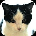 Cat Diaries: expenses, events, cat age calculator icon