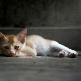 Thinking of you by Partha Pratim Sarkar - Animals - Cats Kittens (  )