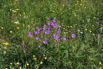 """Photo: """"ja siellä oli maailman kauneimmat sinipunakukkaiset pellot..."""""""